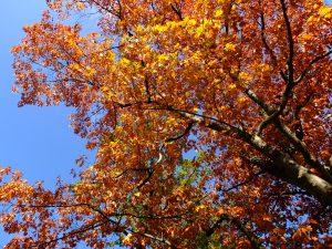 Achtsam wahrnehmen Herbstfarben